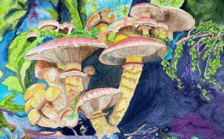 Toadstool Gathering: Tim Barraud