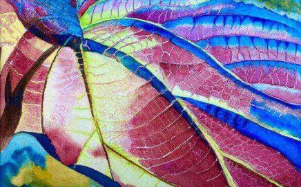 Leaf and Color: Tim Barraud