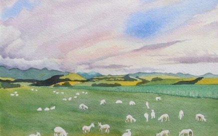 Newly Shorn Sheep: Tim Barraud