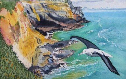 Royal Albatross: Tim Barraud