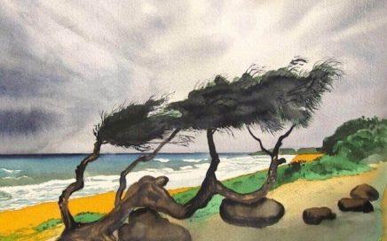 Moody Beach, Kauai: Tim Barraud