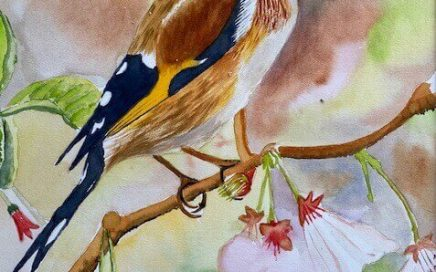 Goldfinch: Tim Barraud