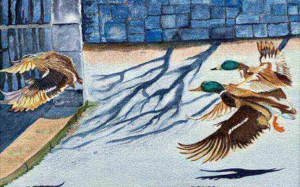Three Ducks Landing: Tim Barraud