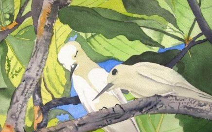 Honolulu Love Birds: Tim Barraud