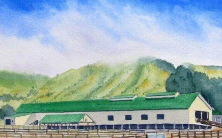 Shearing Shed, Glenburn: Tim Barraud