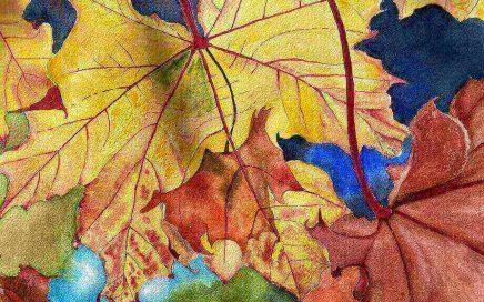 Autumn Leaves: Tim Barraud