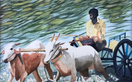 Oxen and Driver: Tim Barraud