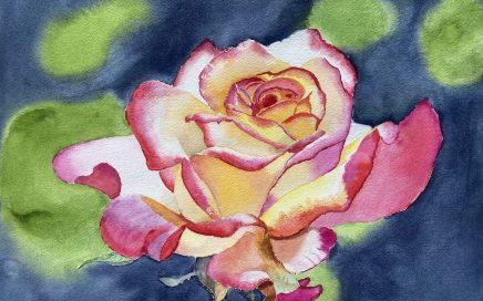 Rose: Tim Barraud