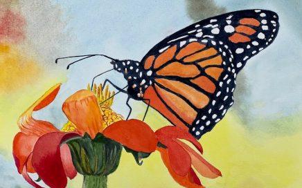 Monarch on Marigold: Tim Barraud